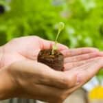 Comment acheter des plantes saines ? 3 conseils essentiels