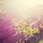 Comment contrôler la végétation dans un grand jardin ?