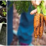 5 étapes de base pour démarrer un jardin urbain biologique