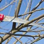 Elagage des arbres : quand et pourquoi ?