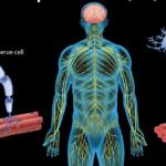 Le CBD peut-il aider à lutter contre la sclérose en plaques ,
