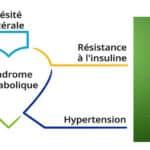 Le CBD peut-il aider à lutter contre le syndrome métabolique ?