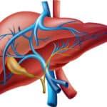 Le CBD peut-il aider les maladies du foie ?