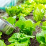 L'utilisation des fumiers et des engrais dans l'agriculture biologique